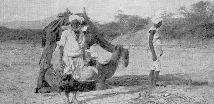 En Érythrée avec un marin et des chameaux